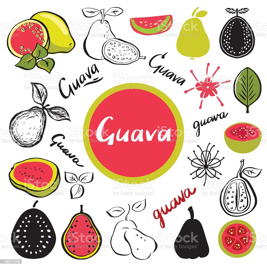 Guava fruit, leafs, flowers vector art illustration
