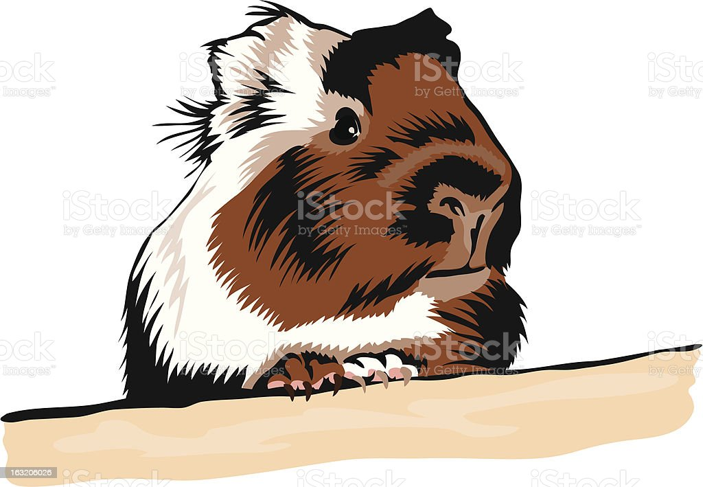 Guinea Pig looking around royalty-free stock vector art