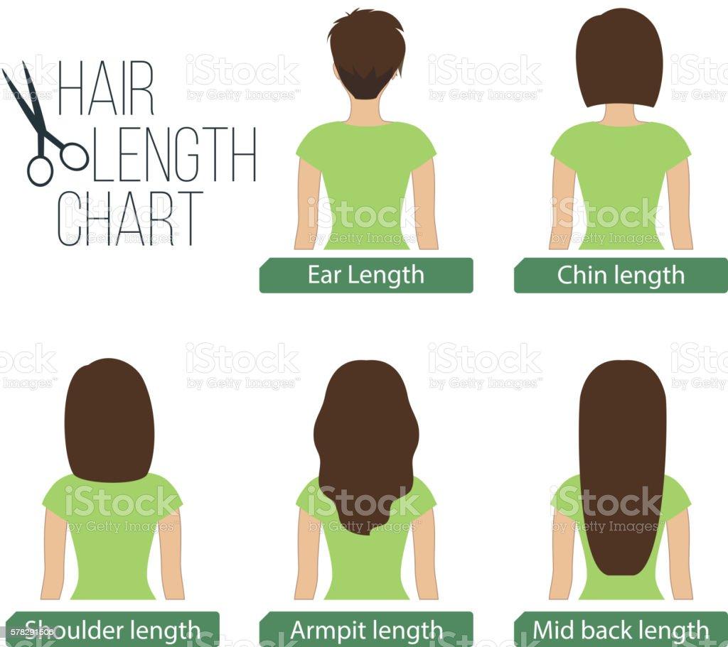 Hair length chart back view vector art illustration
