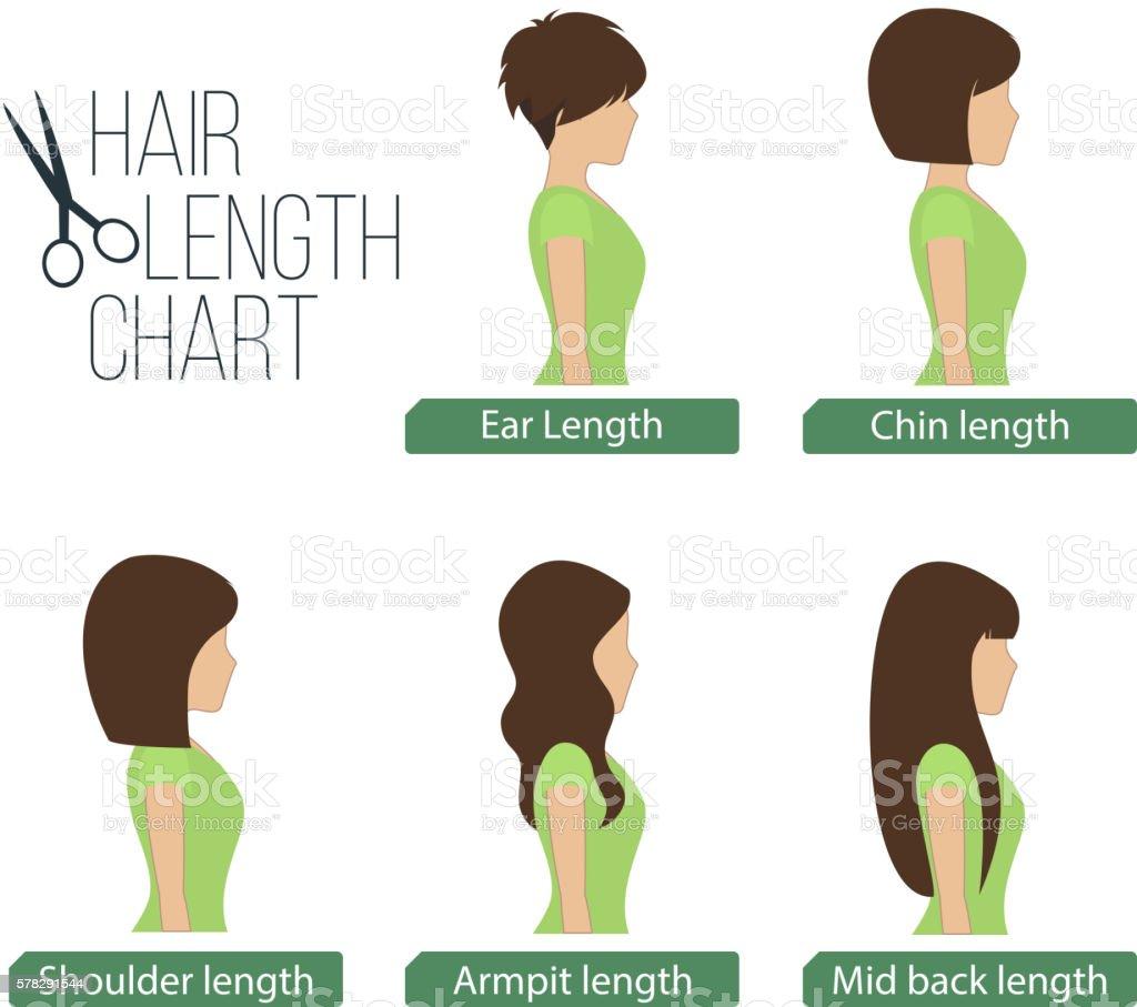 Hair length chart side view vector art illustration