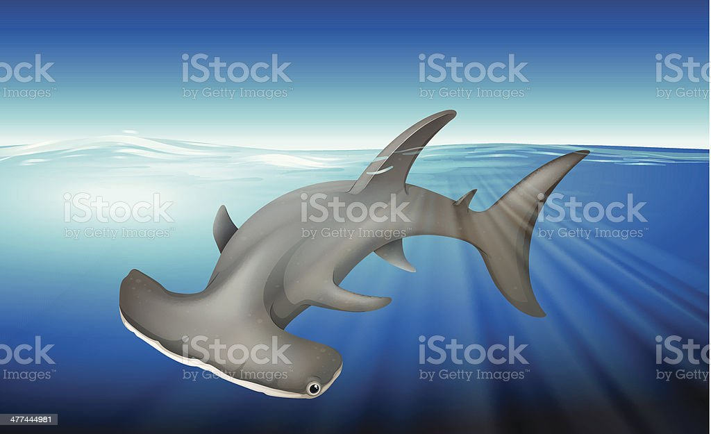 Hammerhead Shark royalty-free stock vector art