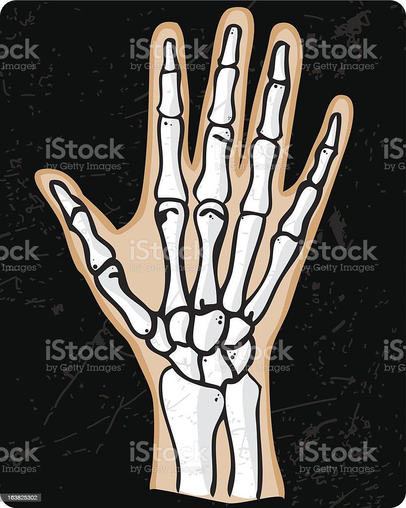 Hand Bones royalty-free stock vector art