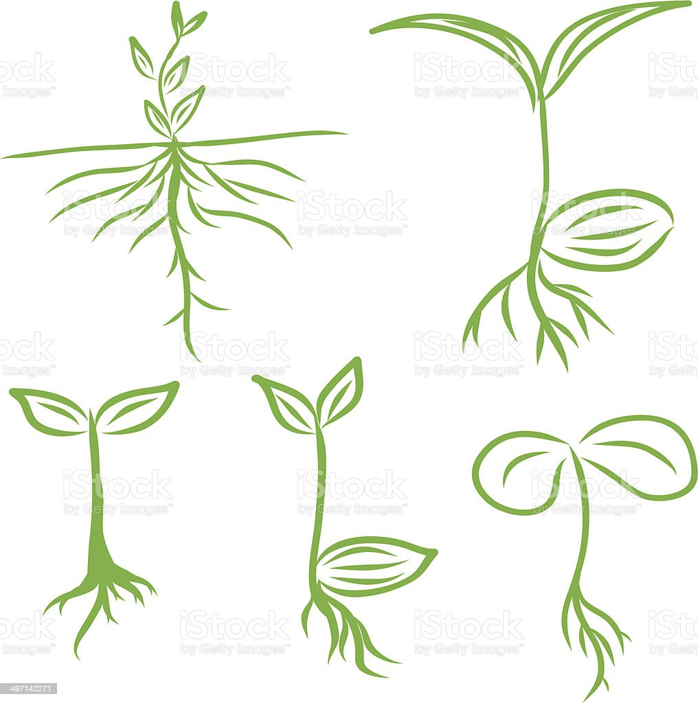 Hand draw Sprouts plants seeding. vector  illustrations EPS10 vector art illustration