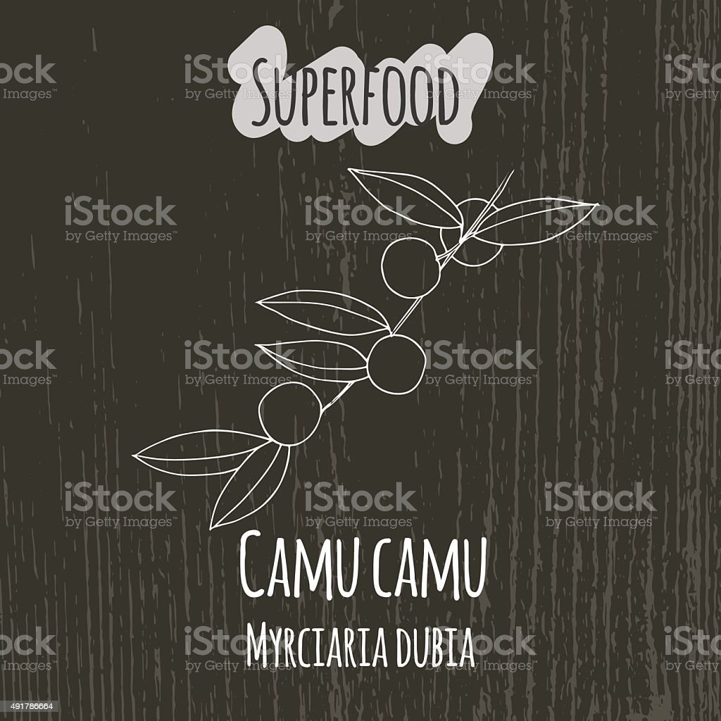 Hand drawing illustration of camu camu. Myrciaria dubia vector art illustration