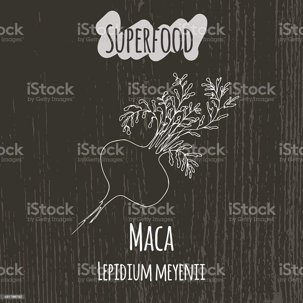 Hand drawing illustration of camu maca. Lepidium meyenii vector art illustration