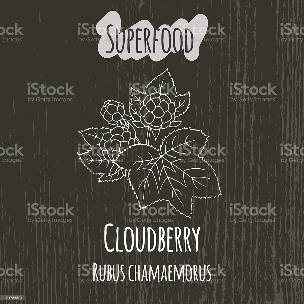 Hand drawing illustration of cloudberry. Rubus chamaemorus vector art illustration