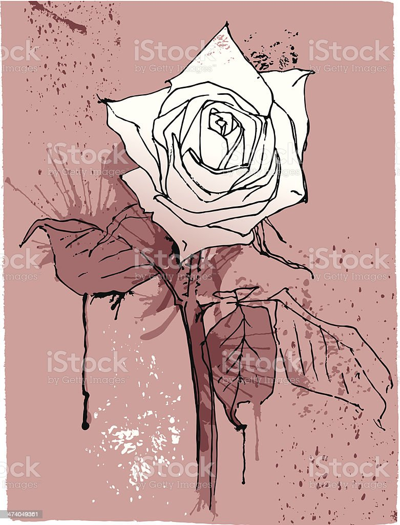Hand drawing vintage rose. royalty-free stock vector art
