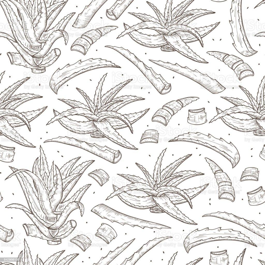 Hand drawn Aloe Vera plant leaves Seamless pattern. Medicinal plants vector art illustration