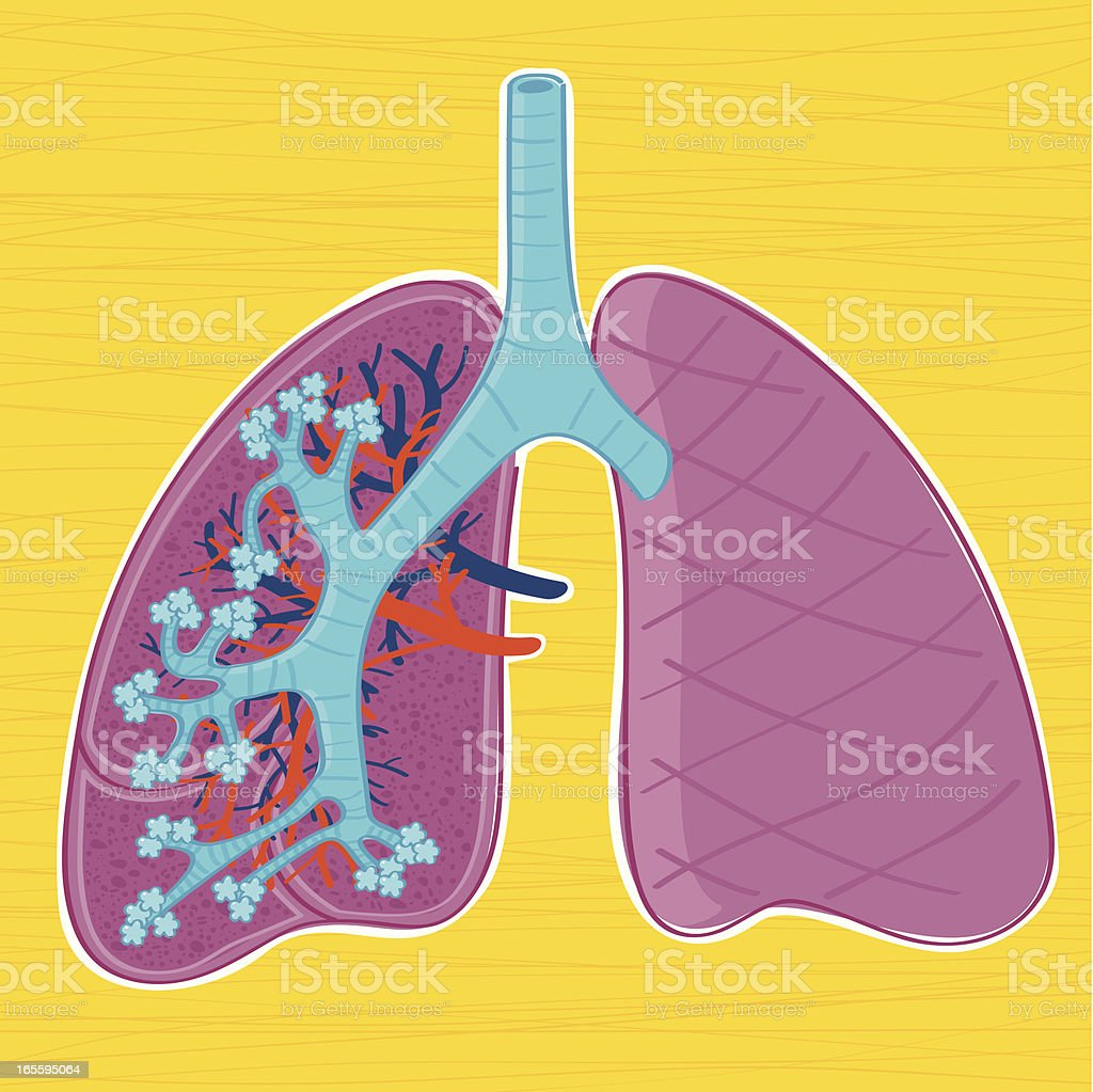 Hand drawn anatomy of the human lungs vector art illustration