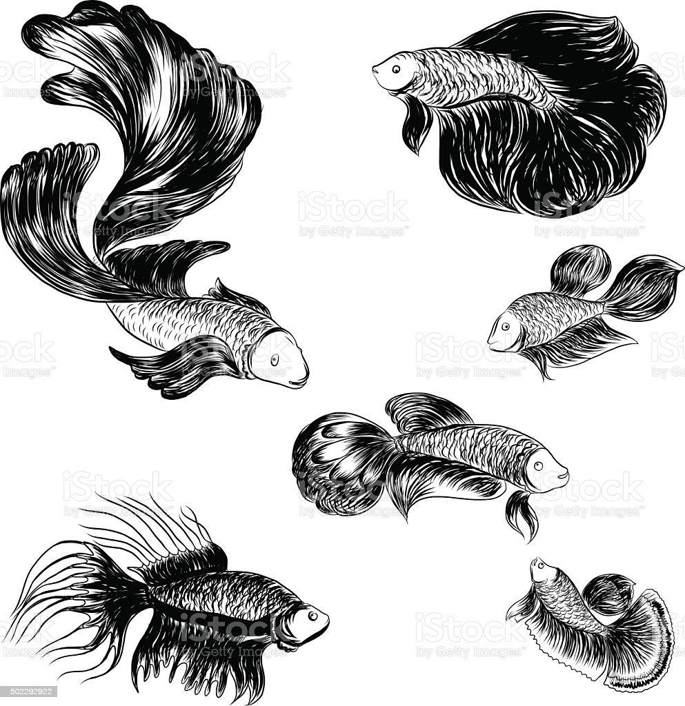 Main dessin et croquis vectoriels poisson combattant - Croquis poisson ...