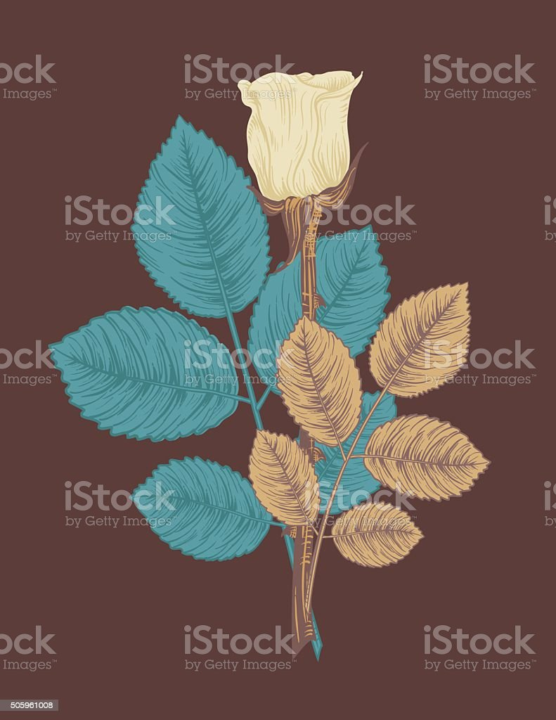 Hand Drawn Botanical Roses vector art illustration