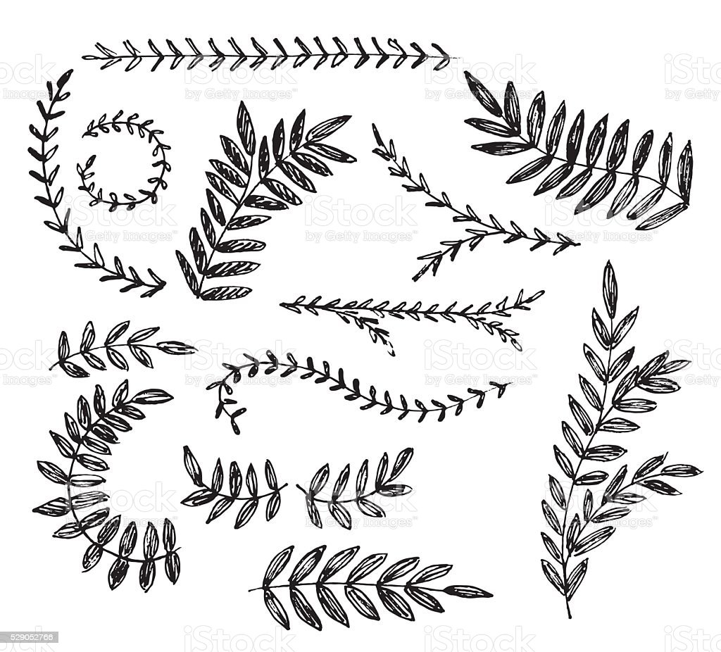Hand drawn branches with leaves. Ink illustration. Vector vector art illustration