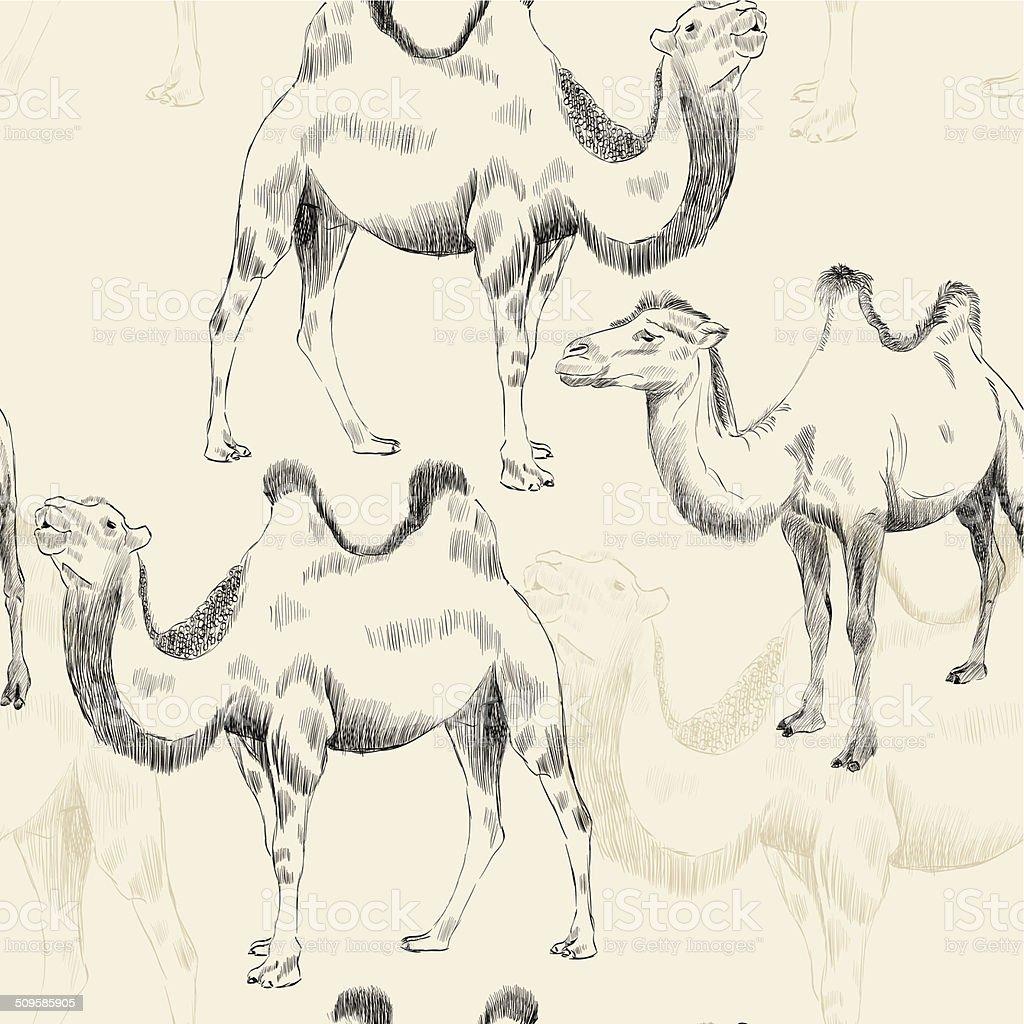 hand drawn camel vector art illustration