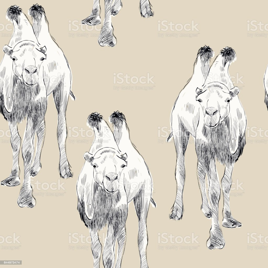 hand drawn camel vector art illustration