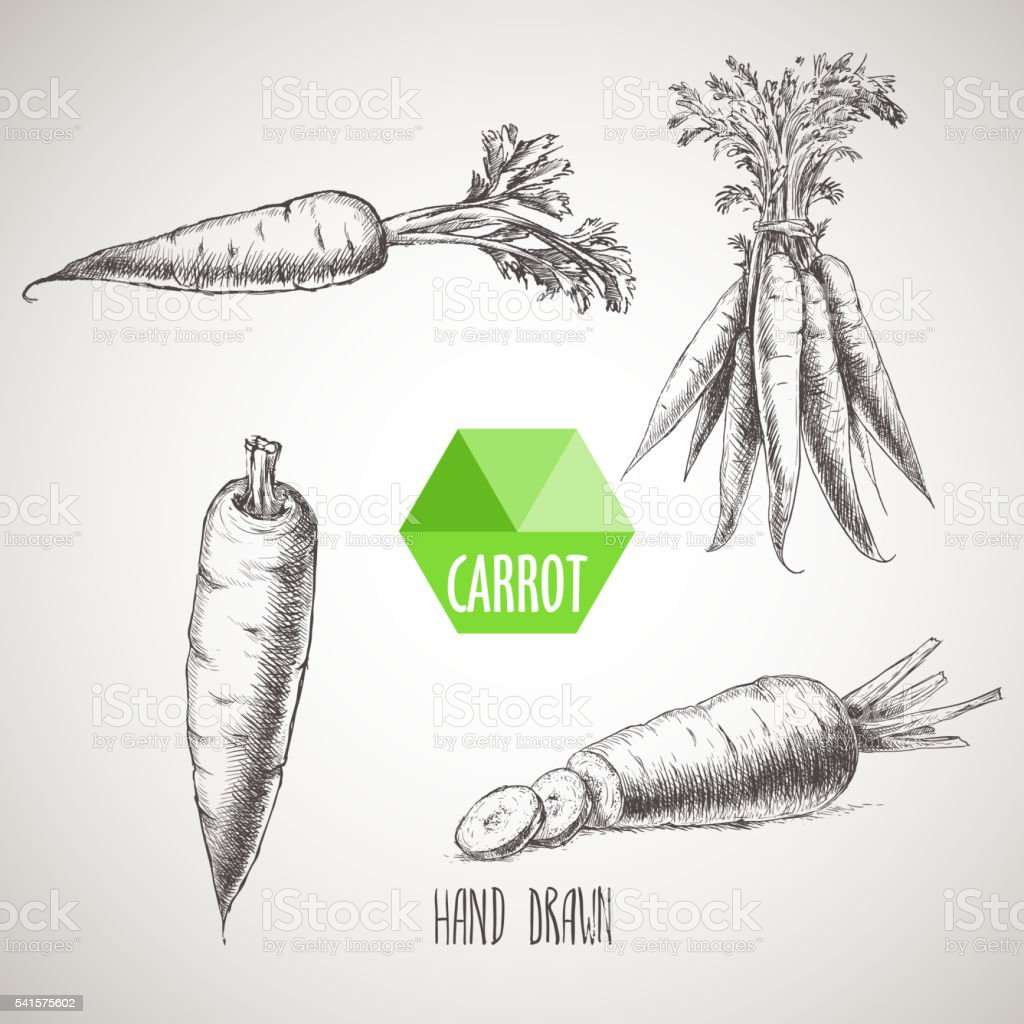 Hand drawn carrot set. vector art illustration