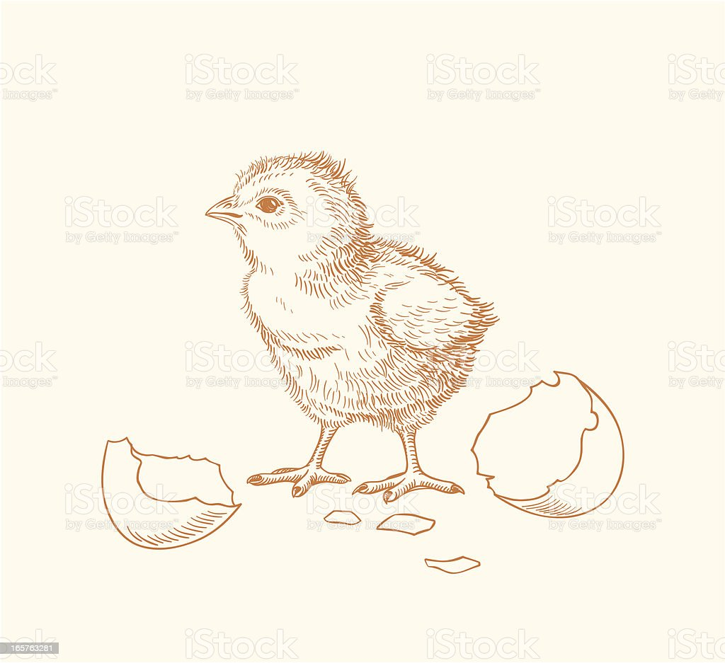 Hand drawn chick hatched out of an egg vector art illustration