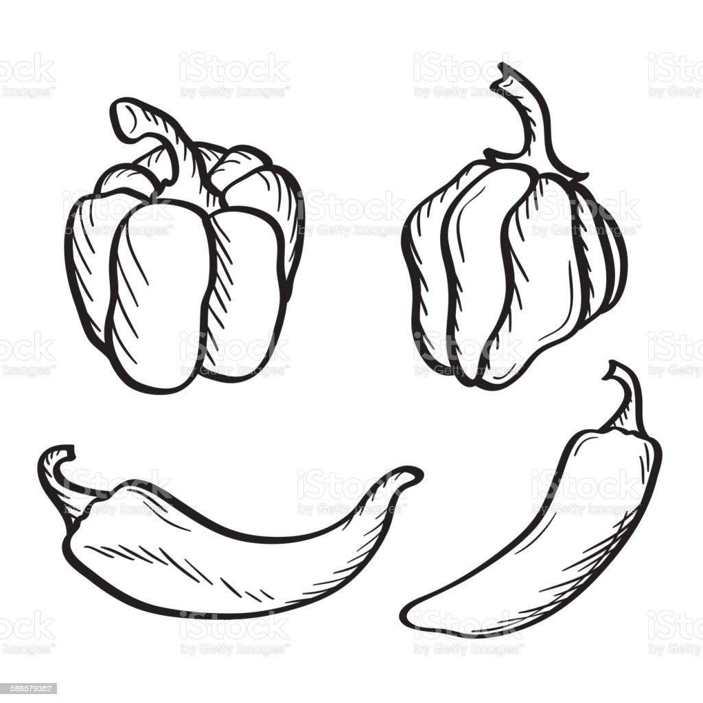 Hand drawn chili peppers and paprika. vector art illustration