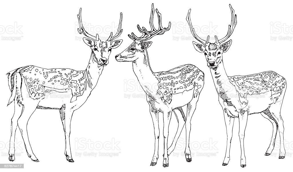 Hand drawn deers. Vector illustration. vector art illustration