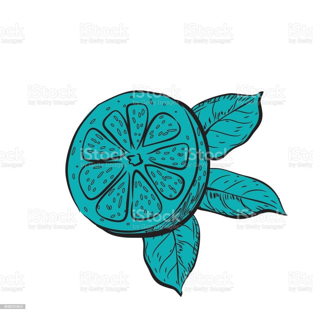 Hand Drawn Detailed Lemons vector art illustration
