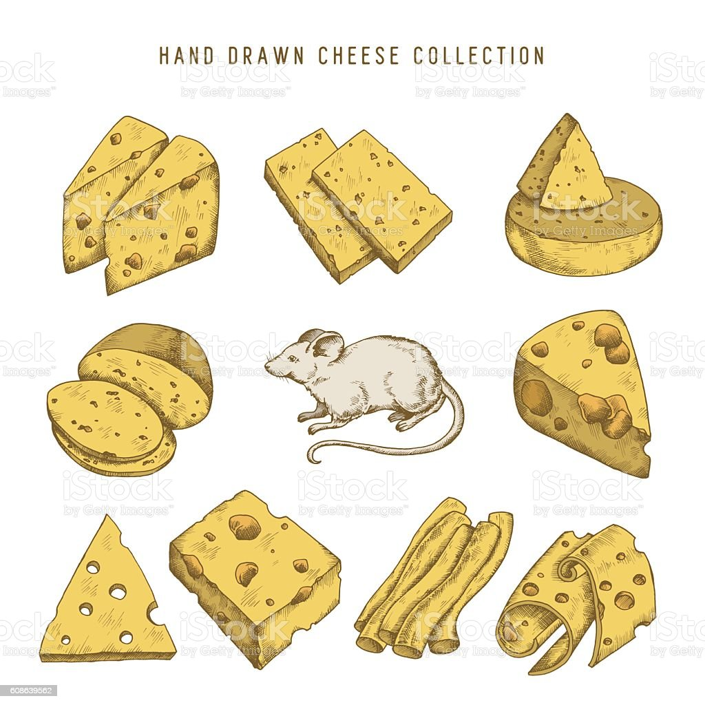 Hand drawn doodle cheese set Vector vintage illustration. vector art illustration