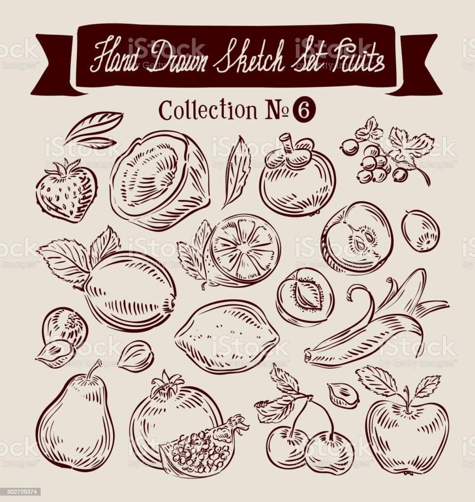 Hand drawn doodle set fruit. Vector illustration vector art illustration