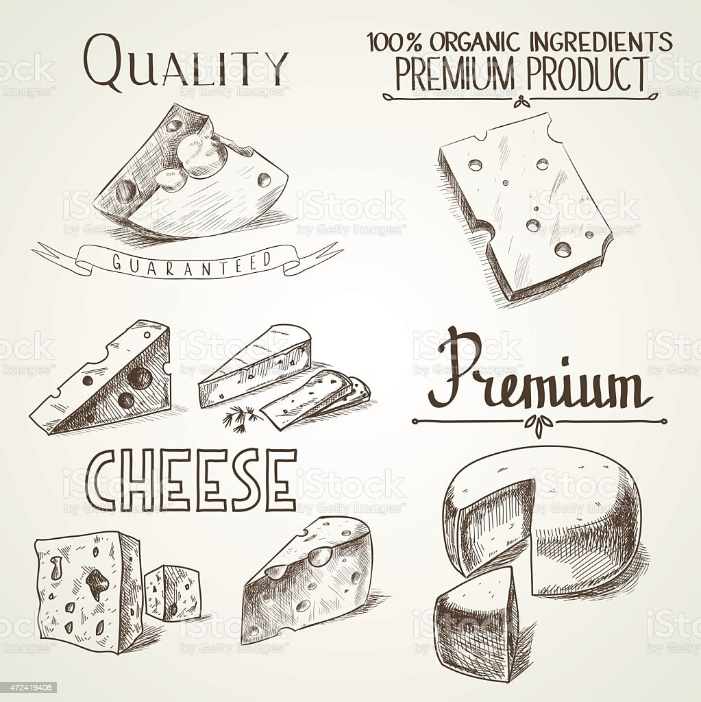 Hand drawn doodle sketch cheese with different premium quality types vector art illustration