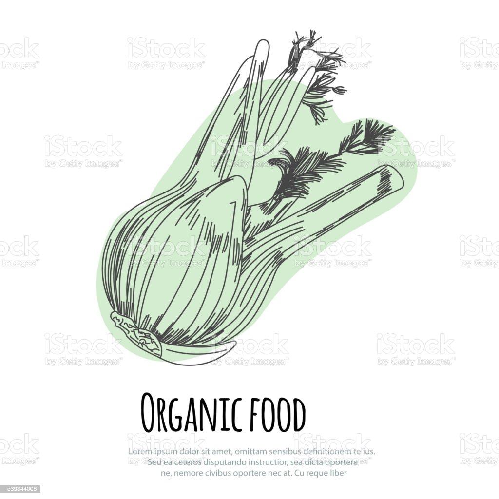 Hand drawn fennel over white background vector art illustration