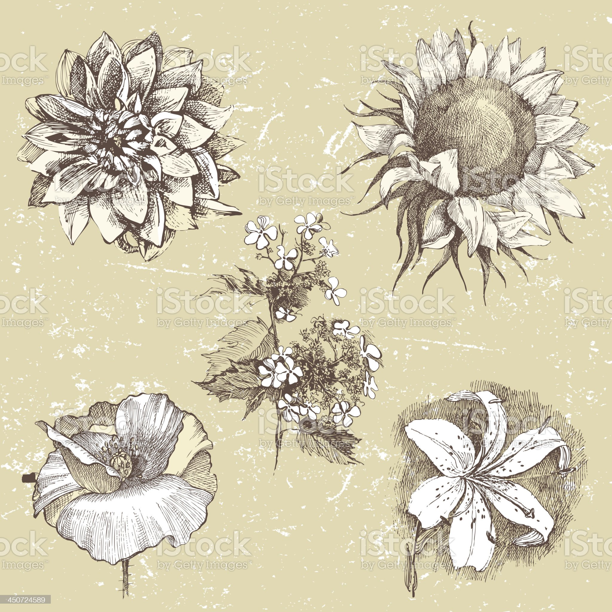 Hand drawn flowers royalty-free stock vector art