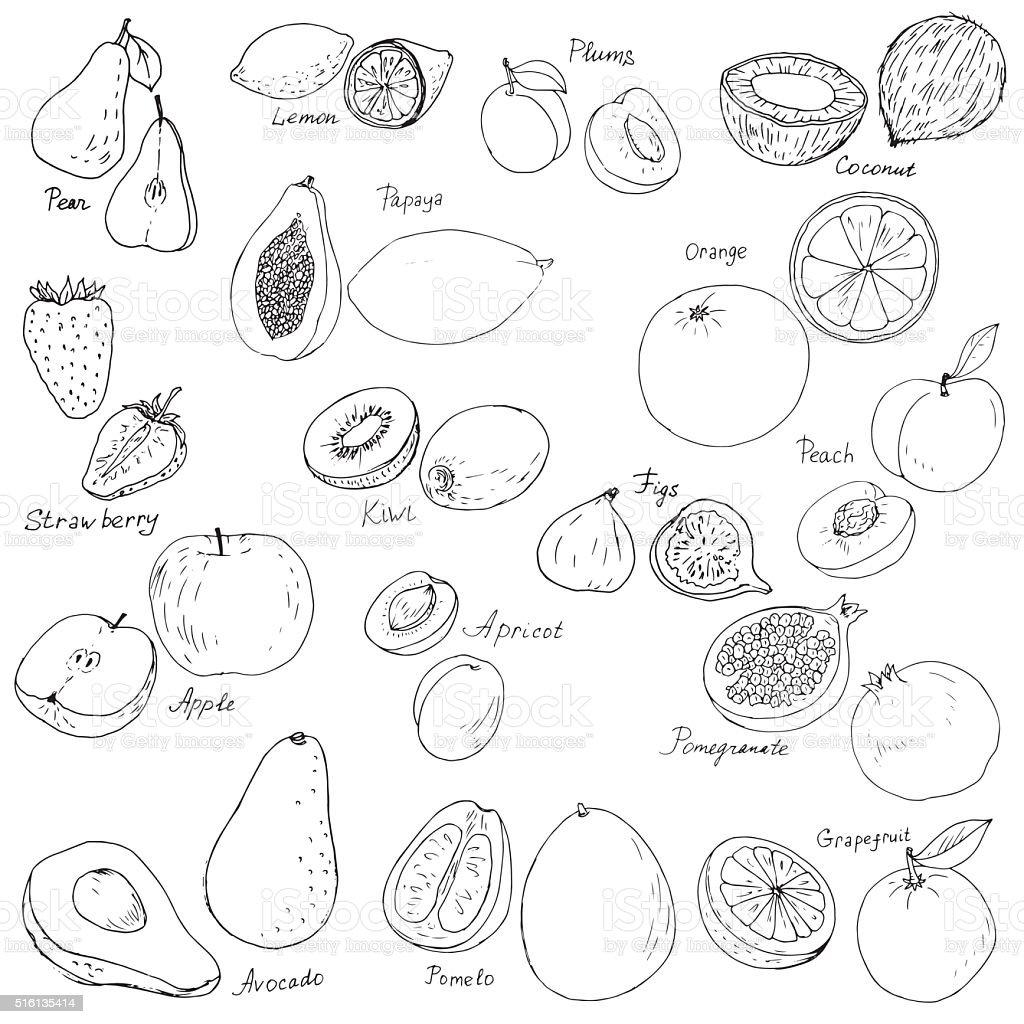 hand drawn fruits vector set vector art illustration