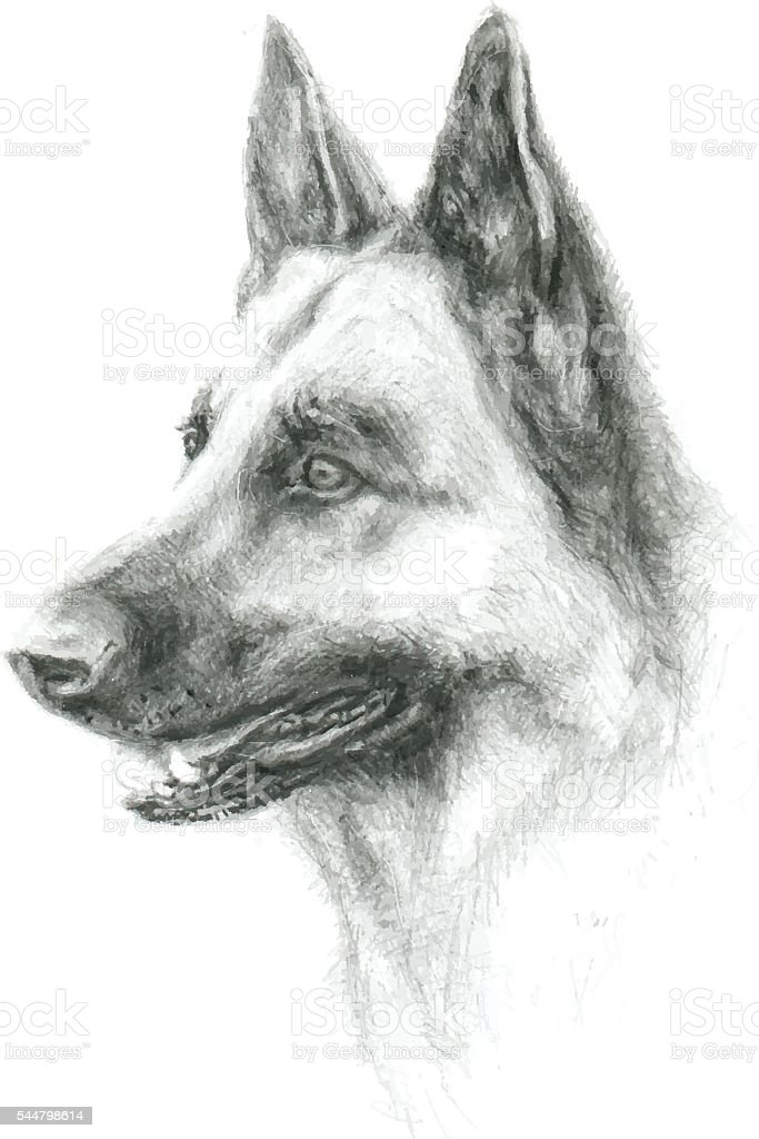 Hand drawn German Shepherd Dog vector art illustration
