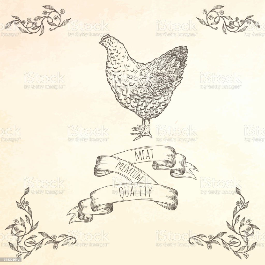 Hand drawn hen illustration. vector art illustration