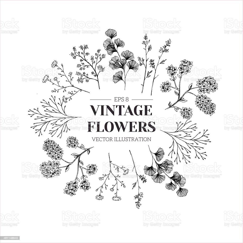 Hand drawn herb composition. Floral template. Vector illustration vector art illustration