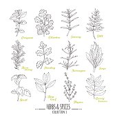 Hand drawn herbs and spices collection. Outline style seasonings