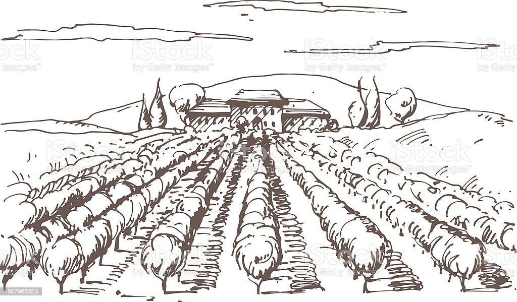 Hand drawn illustration of a vineyard vector art illustration