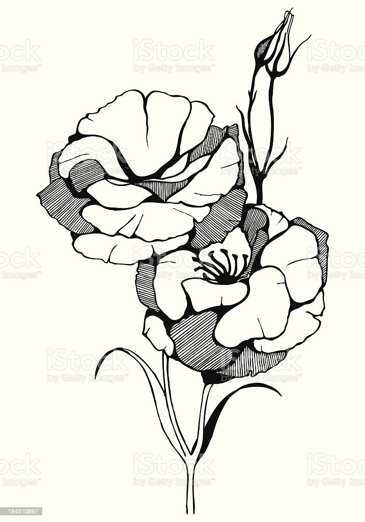 Hand drawn illustration with flower. royalty-free stock vector art