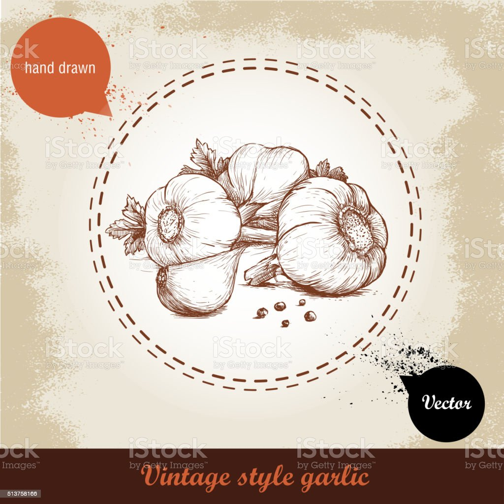 hand drawn illustration with spice garlics and black peppercorn vector art illustration