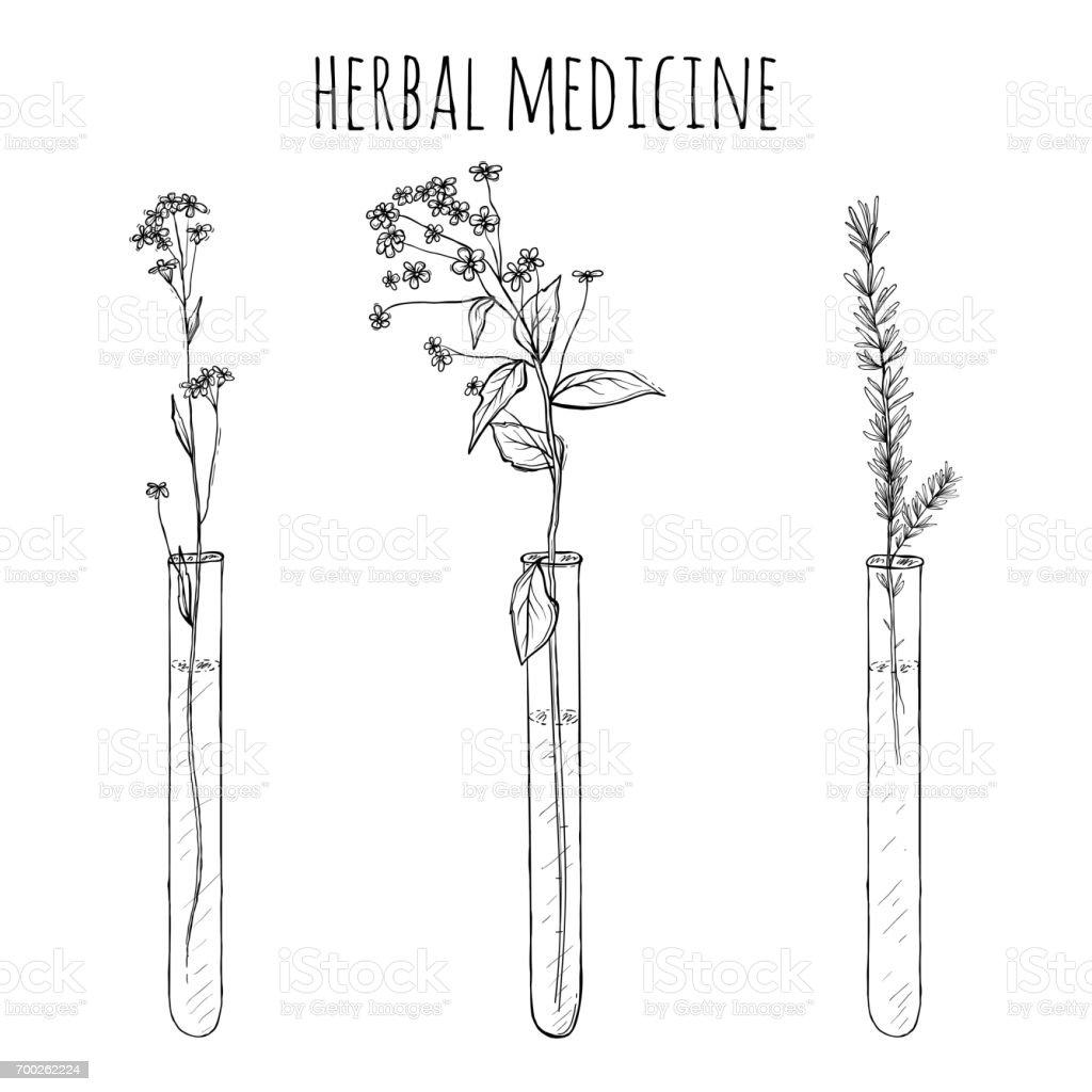 hand drawn lavender plants, Flowers in vitro, vial vector art illustration
