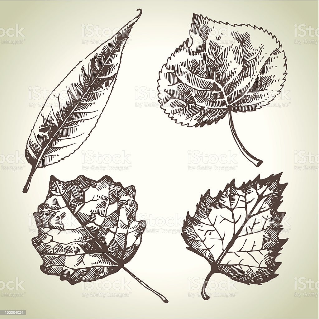 Hand drawn leaf set royalty-free stock vector art