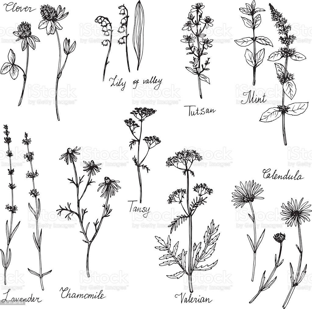 hand drawn medical plants vector art illustration