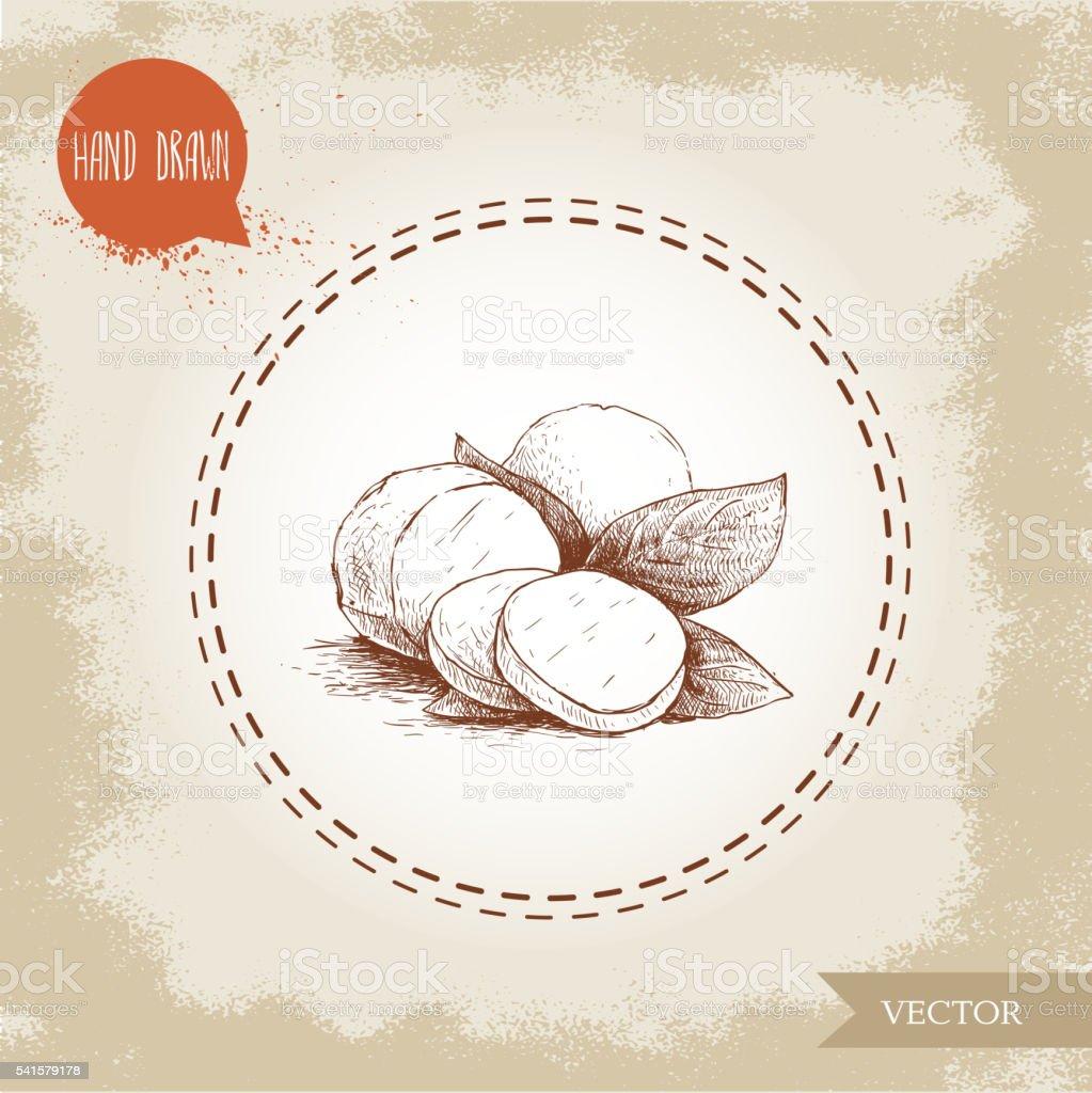Hand drawn mozzarella cheese with basil leafs vector art illustration