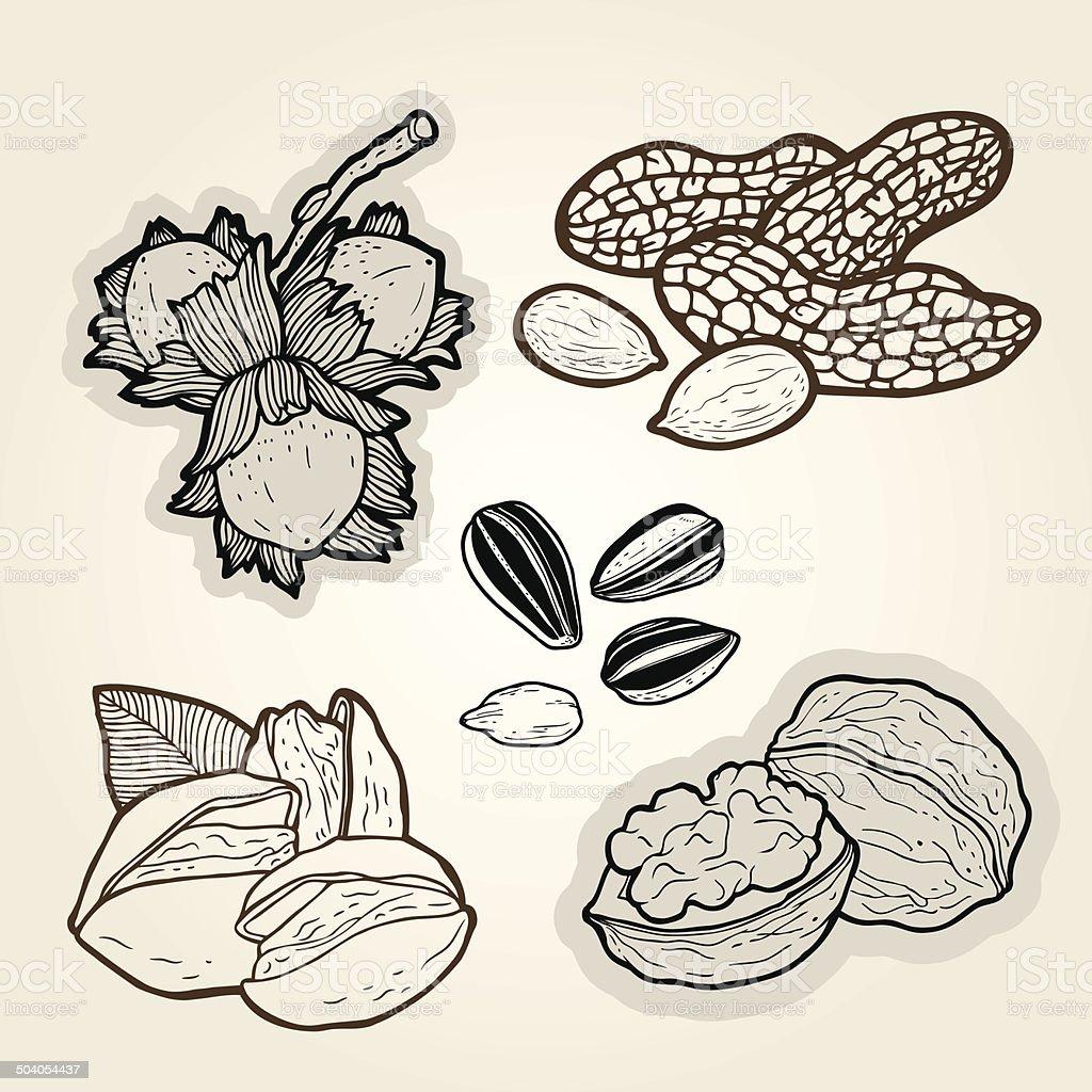 hand drawn nuts- illustration. vector art illustration
