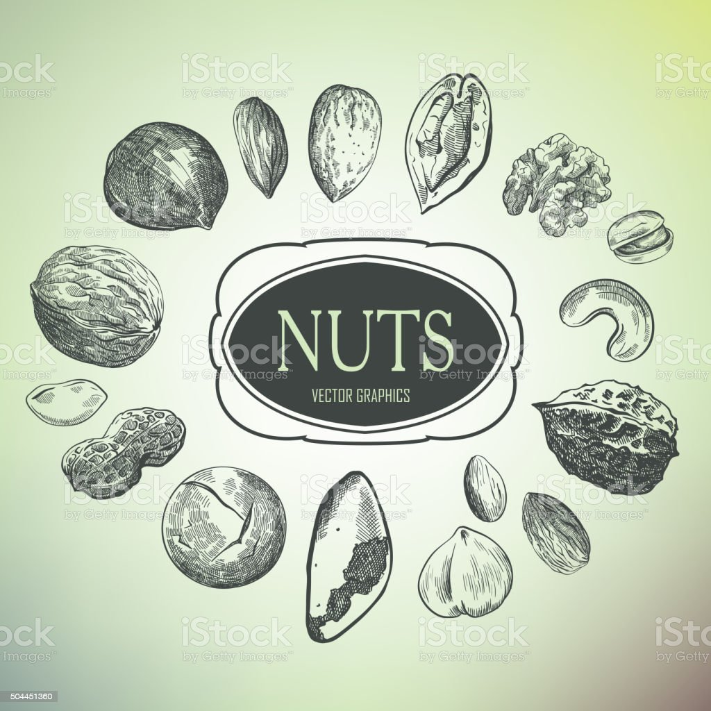 hand drawn nuts vector art illustration