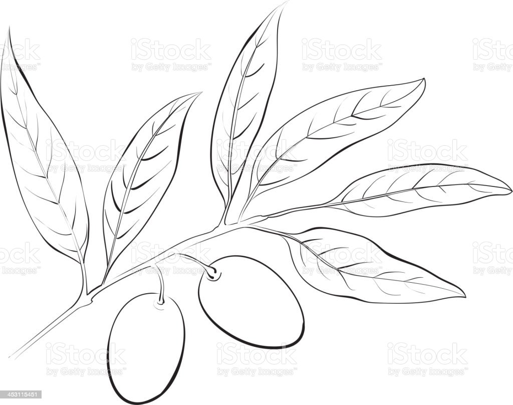 Hand drawn olive branch. royalty-free stock vector art