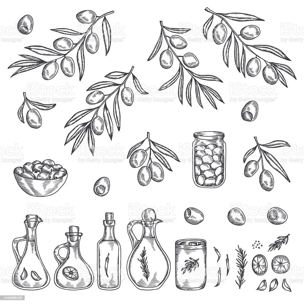Hand drawn olive graphic set. Vector illustration. vector art illustration