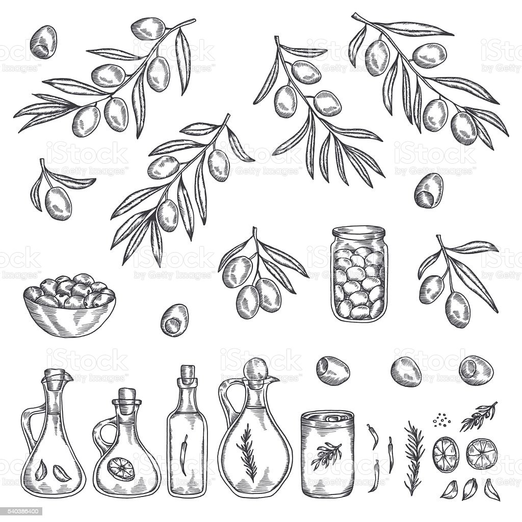 Hand drawn olive graphic set. Vector illustration. vector art illustration