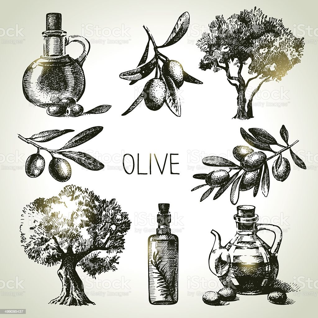 Hand drawn olive set vector art illustration