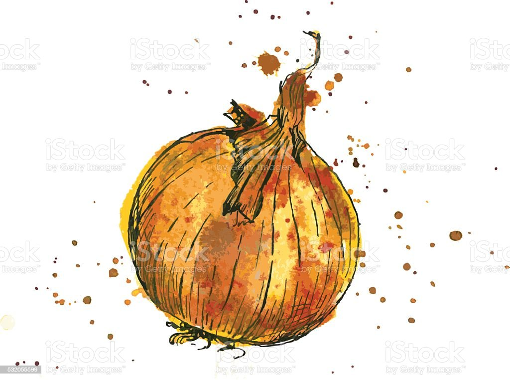Hand drawn onion vector art illustration