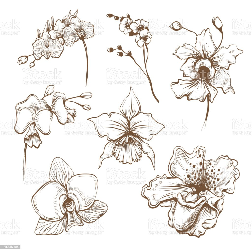 Hand drawn orchid flowers set vector art illustration