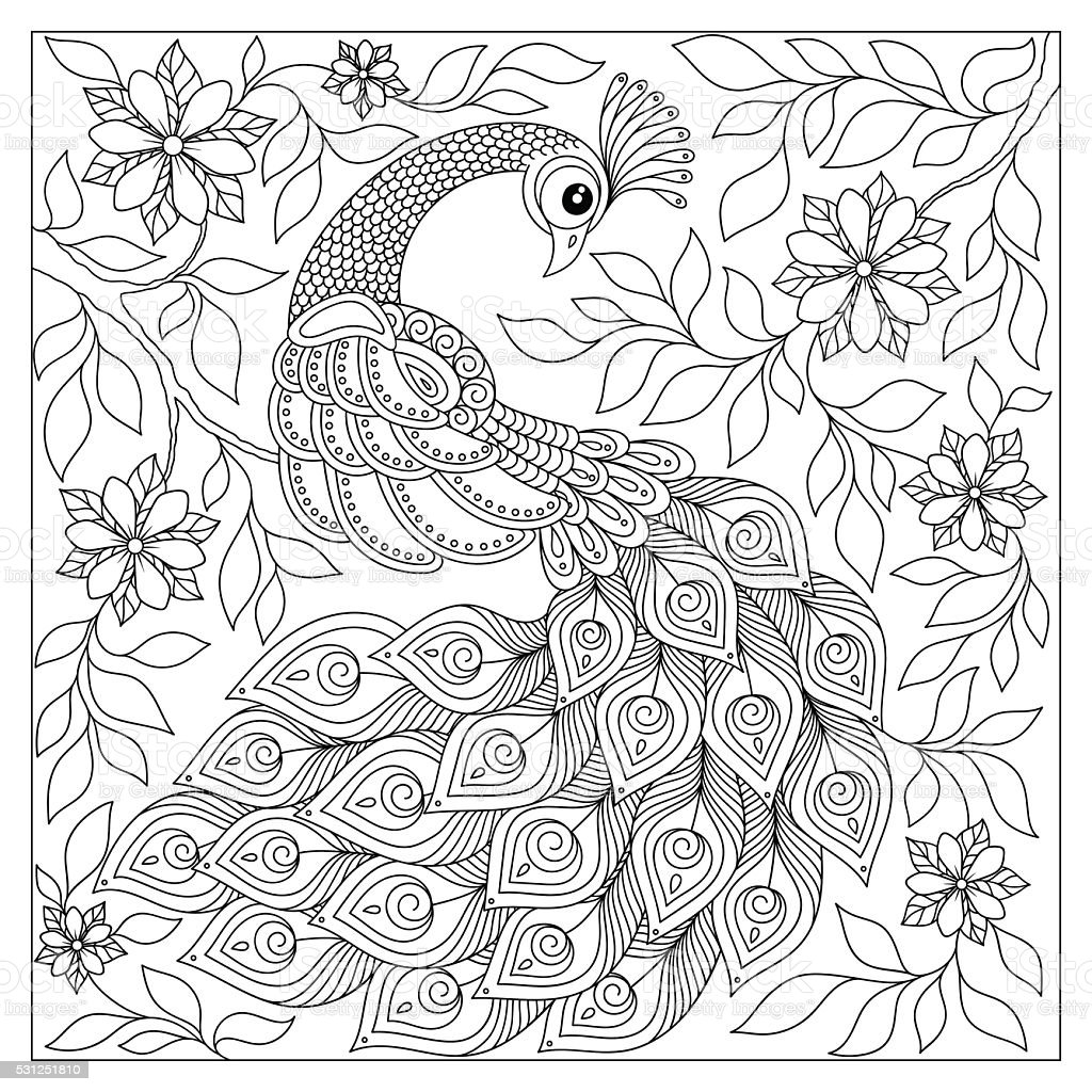 hand drawn peacock for anti stress coloring page stock vector art