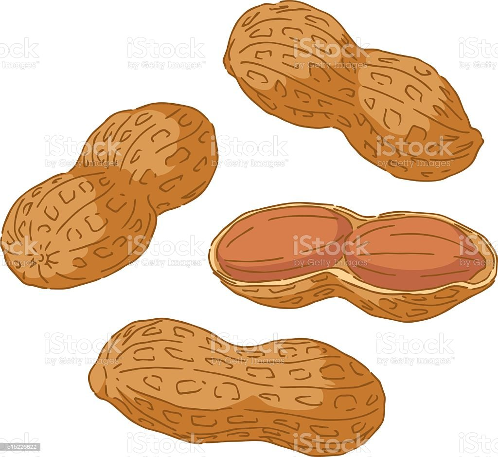 Hand Drawn Peanuts vector art illustration